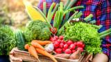 Как да си отгледаме зеленчуци в апартамента