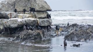 Голямо изтичане на нефт северно от остров Сахалин