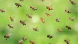 Апокалипсисът на насекомите - опасност за целия живот на Земята