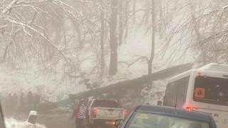 """Паднало дърво временно затрудни пътя към хижа """"Алеко"""""""