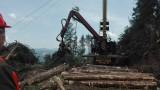 Шефът на ИАГ: Всички горски са принуждавани да участват в схеми