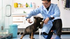 """Китайска компания иска да клонира полицейски кучета """"на едро"""""""
