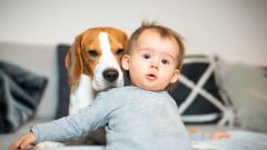 Ето защо една кучешка година не е равна на седем човешки
