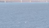 16-годишен ученик потъна в Дунав край Силистра