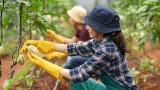 Колко плащат на работниците в селското стопанство и строителството на Острова?