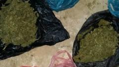 Разкриха домашна наркооранжерия в Ахелой