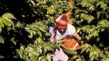 Има ли връзка между кафето и засилващата се миграция към САЩ?