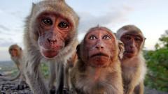 Коронавирус: Китай пробва ваксина върху маймуни, които бързо са придобили имунитет