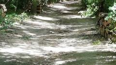 Има план за изсичане на 30% от гората на Борисовата градина, тревожат се столичани