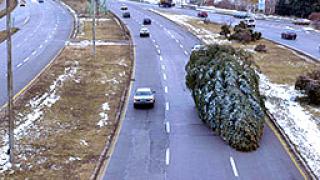 От зоопарка в Добрич призовават да не се изхвърлят коледните елхи