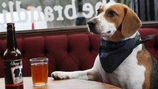Кучето - верен приятел и в пиенето на бира