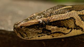 Змия избяга от зоомагазин в търговски център в Пловдив