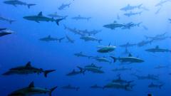 """Австралия """"преселва"""" усилено акули"""