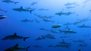 Акула уби момиче в Западна Австралия
