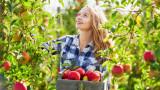 Британските фермери настояват за европейски работници и след Brexit