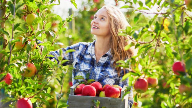 Британските фермери силно се нуждаят от европейски работници и след Brexit