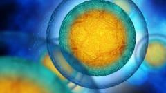 Колко стари са клетките в тялото ни