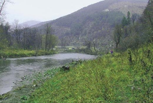 Неизвестен препарат изтрови риба в река Широколъшка