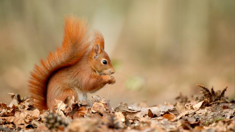 Един на всеки пет бозайници във Великобритания застрашен от изчезване
