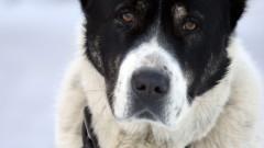 Мъж застреля три породисти кучета с ловна пушка