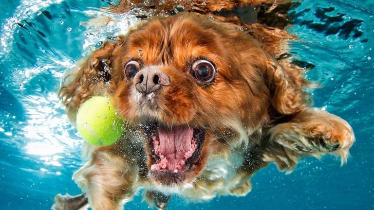 Колко смешни могат да бъдат кучетата под вода