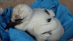 8 бедстващи птици бяха спасени