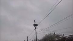 Намериха 12 трупа на щъркели в Разградско