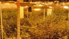 Разбиха наркооранжерия в апартамент в Ботевград