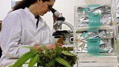 Хърватия легализира марихуаната за медицински цели