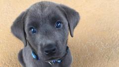 Как оценяването на кучета в Twitter се превръща в доходоносен бизнес