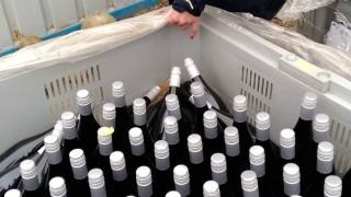 Разкриха нелегална винарна в Ямболско