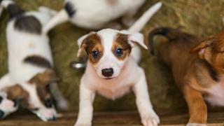 """""""Подари си приятел"""" от общинския приют за кучета"""