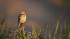 Една пета от видовете птици в Европа застрашени от измиране