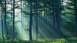 Държавата не може да си върне 4500 дка надвзети от Симеон гори