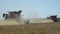 Ожъната е 90% от  пшеницата, реколтата до момента е 3,92 млн. тона