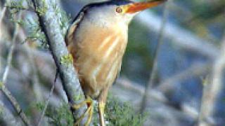 Защитени птици иззеха от зоомагазин в столицата