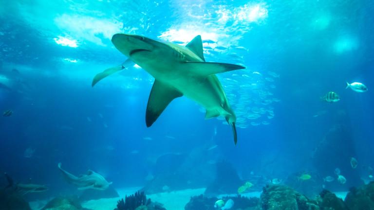 10 души са загинали, нападнати от акули през 2020 г.