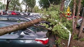 Силният вятър събори дърво върху три коли в Асеновград