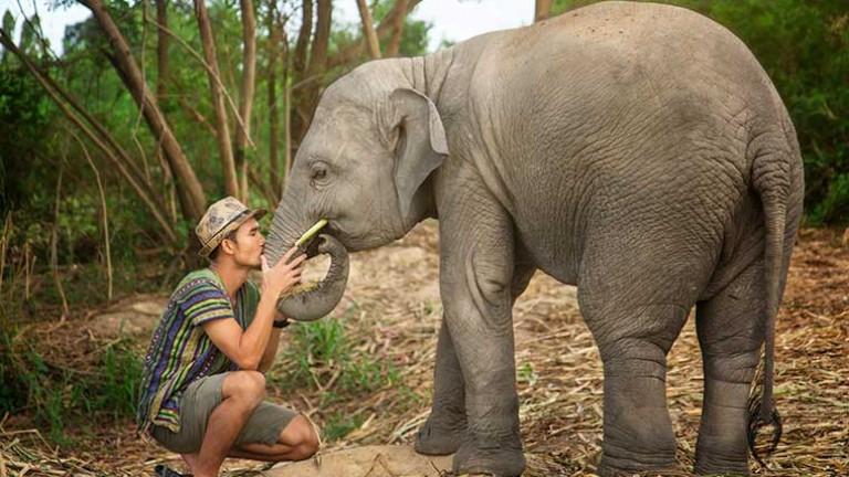 Природният парк на слоновете се намира в провинция Чианг Май