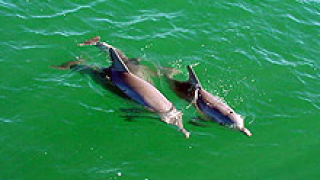 50-тина трупове на делфини открити в Перу
