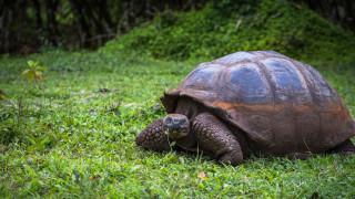 Най-старото животно на света вече приема посетители