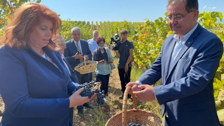 Бозуков: С 20 % по-висок добив от грозде очакваме тази година