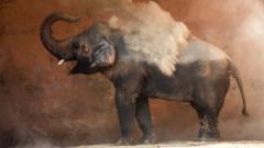 Най-самотният слон на света вече не е сам