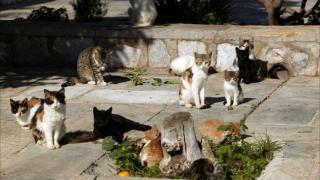 Улични котки спасиха дете от измръзване