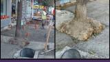 """Столичната ул. """"Граф Игнатиев"""" е с бетонирани дървета"""