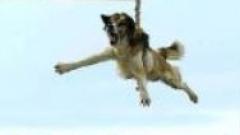 Еколози с подписка срещу тричането на кучета в Бродилово