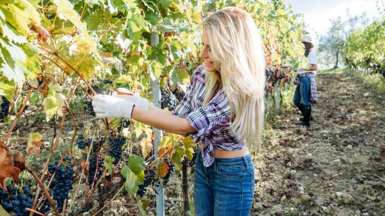 """Великобритания ще """"внася"""" сезонни работници от Източна Европа, въпреки органиченията"""