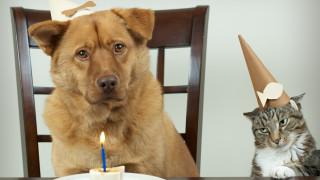 Кучешките и котешките години не са това, което бяха
