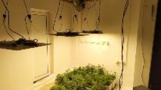 Арестуваха мъж, направил оранжерия за марихуана в търговско помещение