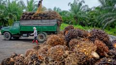 Срив в производството очаква най-консумираното растително масло в света